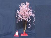 桜立木③ (3)