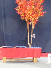 紅葉樹2 (1)